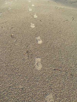 beach notes-onefoot