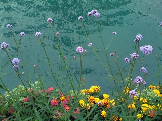 flowers_floating_over_the_river_by_liz_strauss.jpg