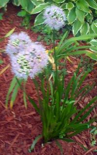 Tuesday's_Flower_by_Liz_Strauss
