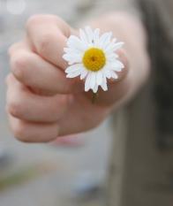 a_daisy