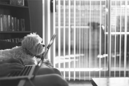 entrepreneur with laptop dog