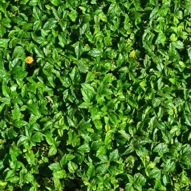 Field of green, single flower